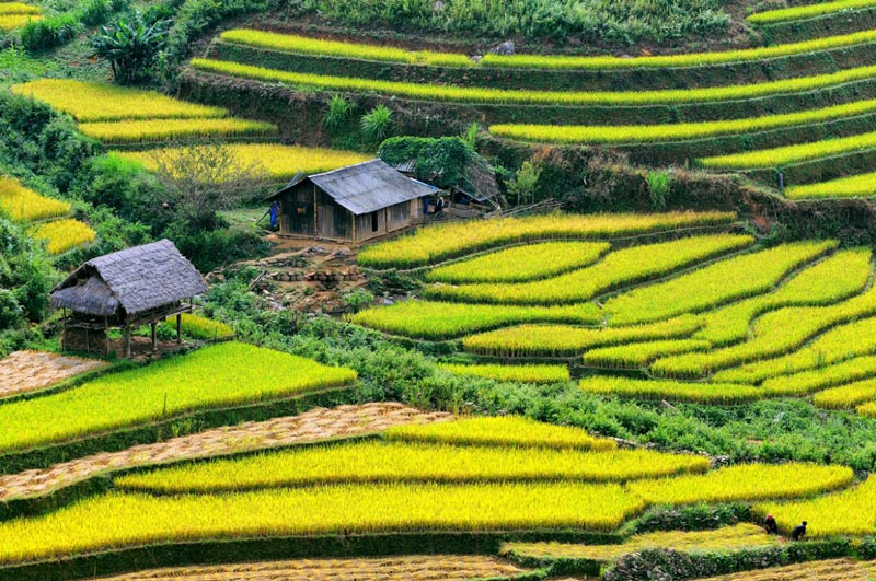 Vietnam Tours Packages